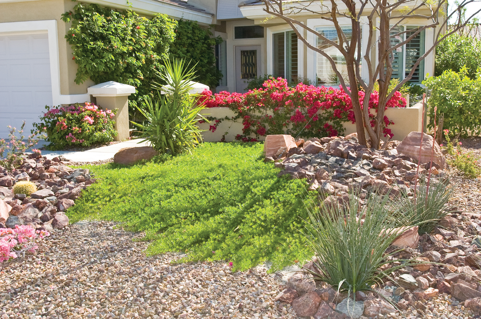 17 - Convert Your Front Lawn for Water Efficiency
